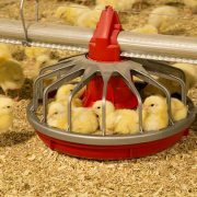 خرید تجهیزات مرغ