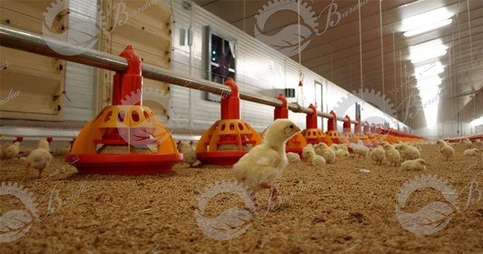 قیمت دانخوری مرغ گوشتی