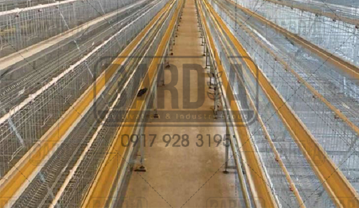ساخت قفس مرغ گوشتی