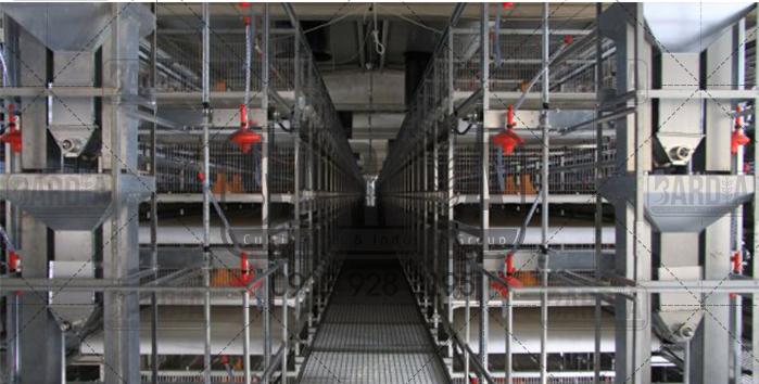 تولید قفس برای مرغداری